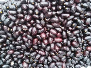 Picture of African Elemi