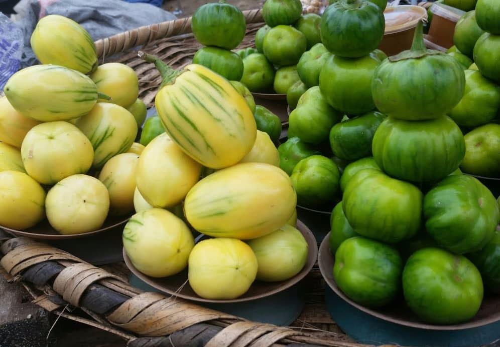 Types of African Garden Eggplant