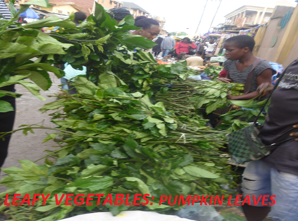 INDIGENOUS LEAFY VEGETABLES