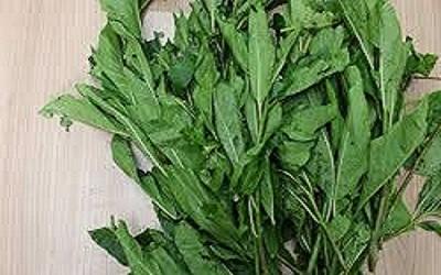 Bitter Leaf benefits