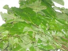 Oha leaves