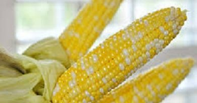 how to cook corn on the cob - boiling