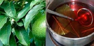 Avocado Health benefits For Tea Image