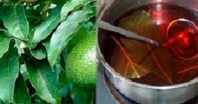 Avocado Health benefits Image