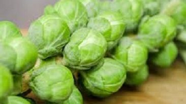 Best Brussels sprouts Image