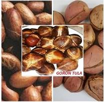 The Benefits of Goron Tula