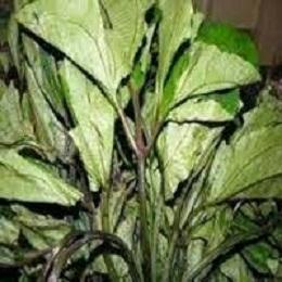 Indigenous leafy vegetables  -Ugu Vegetable