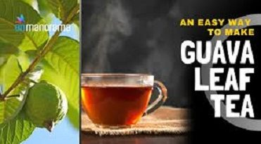 Guava Leaf Tea Uses