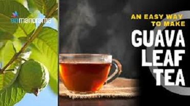 Guava Leaf Tea Uses