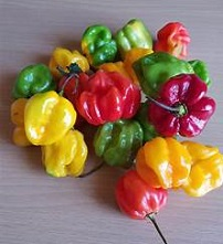 Jamaican Scotch Bonnet Pepper Hot Sauce