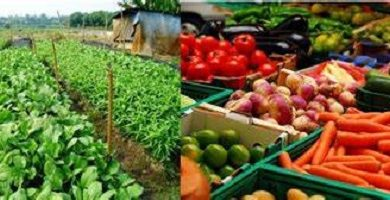 Vegetable Farming Profitable Vegetables to Grow in Nigeria