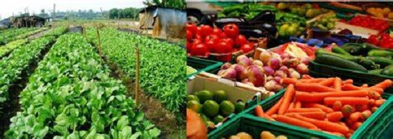 Vegetable Farming Profitable Vegetables to Grow in Nigeria