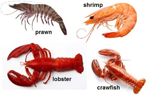 How to Differentiate Between Crayfish, Prawn, and Shrimp