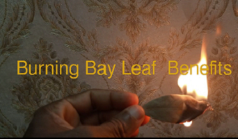 Burning Bay Leaves Amazing Benefits, Risks, and How to