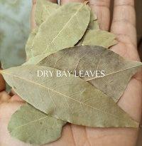 Bay Leaf Health Benefits & Uses