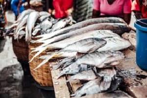 Popular Fish and Seafood Market in Lagos Nigeria