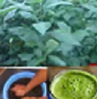 Benefits of Scent & Bitter Leaf Juice to Health