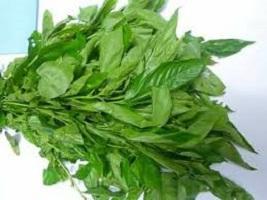 Health Benefits of Jute Leaves