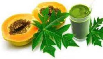 How to Use Pawpaw Leaf to Shrink Fibroid Naturally Picture