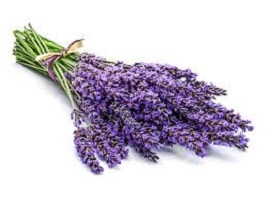 Possible Health Benefits of lavender