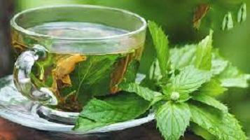 The Effects of Scent Leaf on Female Fertility
